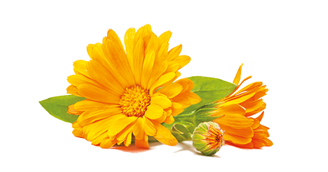 Glycérine et Calendula